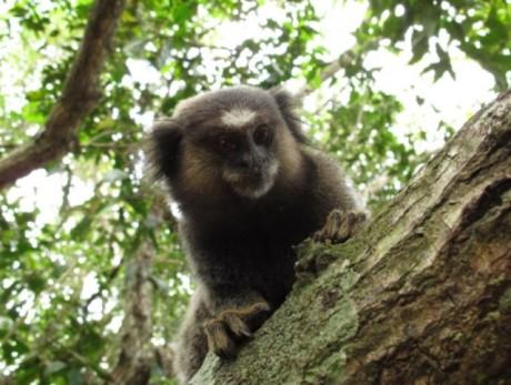 FOTO: mico opice