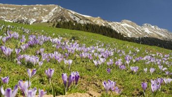 Příroda v Rakouských Alpách. Zdroj: wikimedia.org