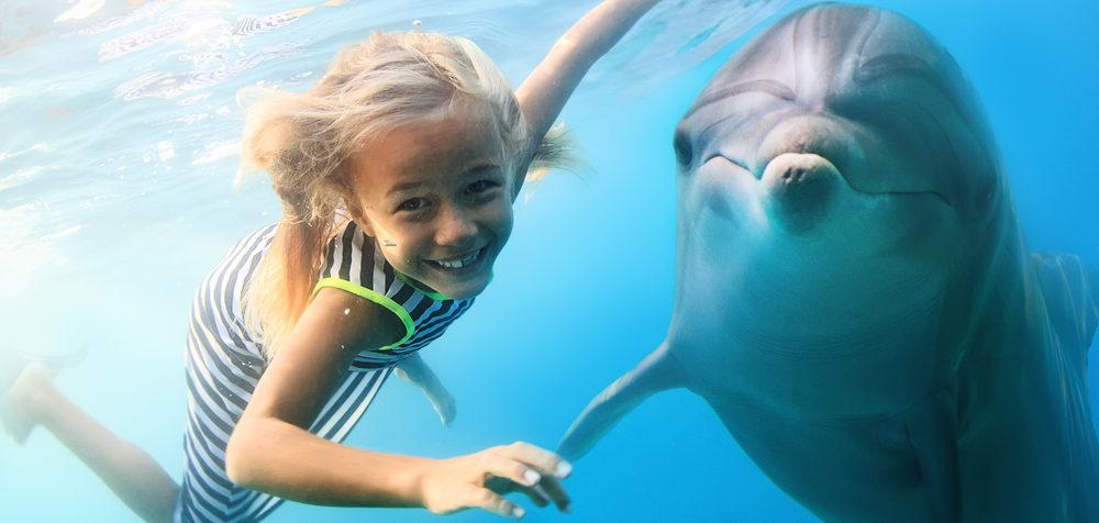 Kam za delfíny, plavání s delfíny