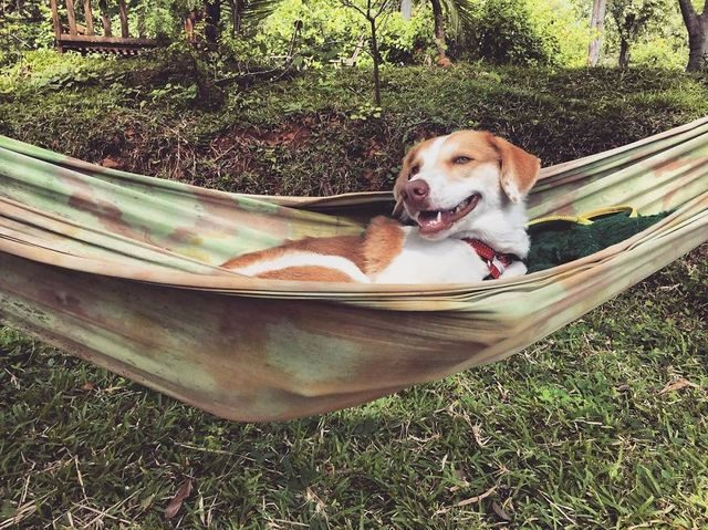 Ginger, pes cestovatel