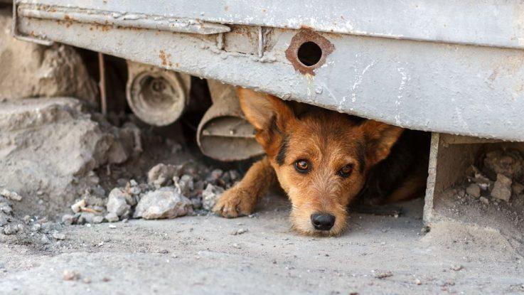 Toulavý pes zachráněn Harvey