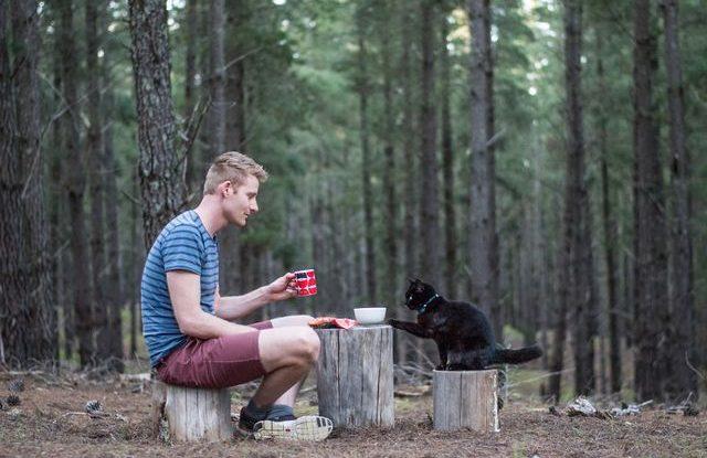 Kočka cestovatel