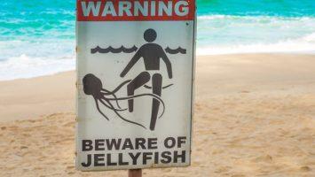 Jakým zvířatům se vyhnout na dovolené
