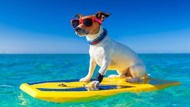 Se psem k moři, jak vybrat vhodnou destinaci