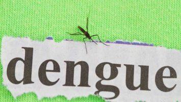 Horečka dengue a komáři