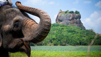 Kde neprší, Srí Lanka