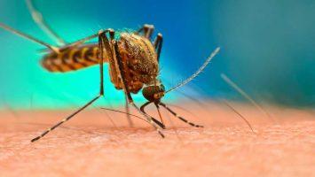 Malárie a nemoci od komárů