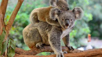 Zvířata ve volné přírodě