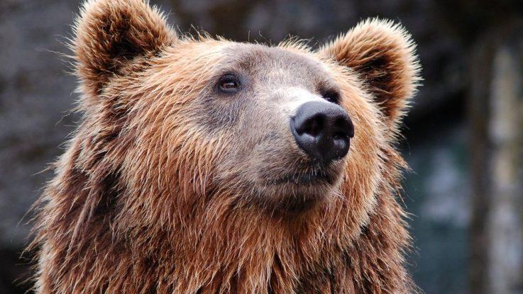 Co dělat když potkám medvěda