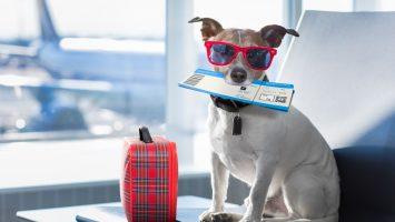 Jak převézt zvíře do zahraničí