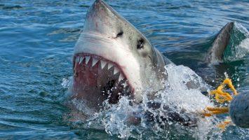 žraloci nebezpečí