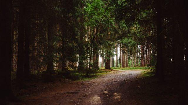 Příroda v okolí Mariánských Lázní