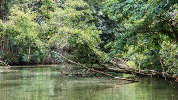 Moravská Amazonie